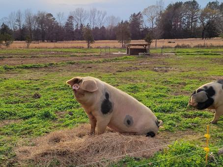 Porch Swing Farm Day 3/23