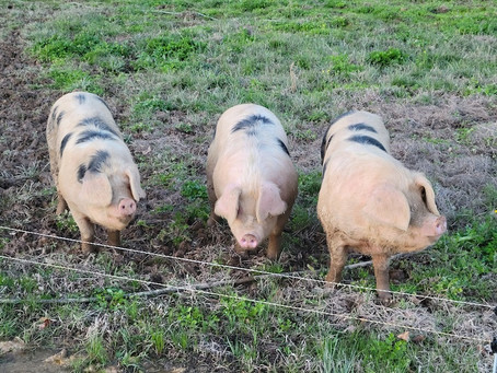 Porch Swing Farm Day 3/24