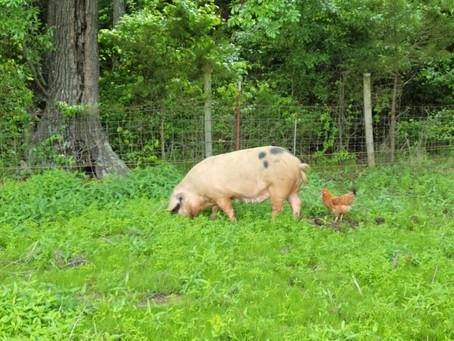 Porch Swing Farm Day 5/10
