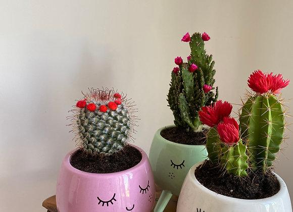 Colourful Cactus's
