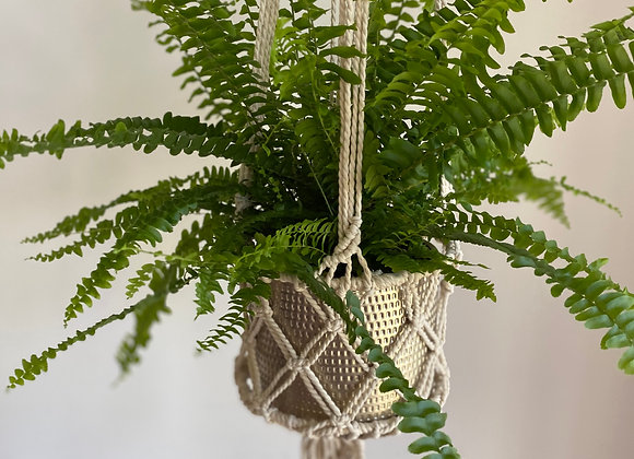 'Air Purifying Collection' Macrame hanging with Green Lady Boston Fern