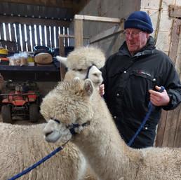 big alpacas.jpg