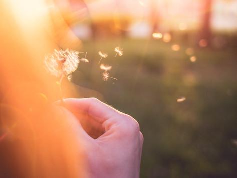 Planting Seeds of Light
