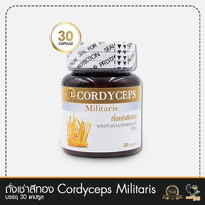 ถั่งเช่าสีทอง Cordyceps Militaris