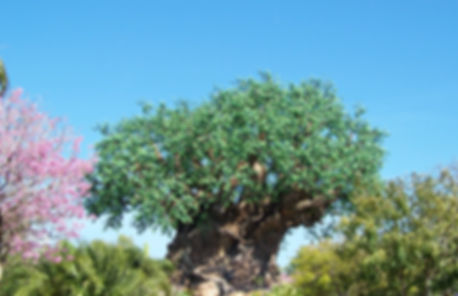 Tree of Life, Discovery Island, Disney's Animal Kingdom