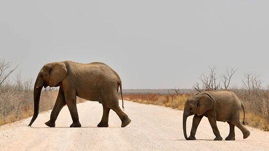 elephant-1170107_1920.jpg