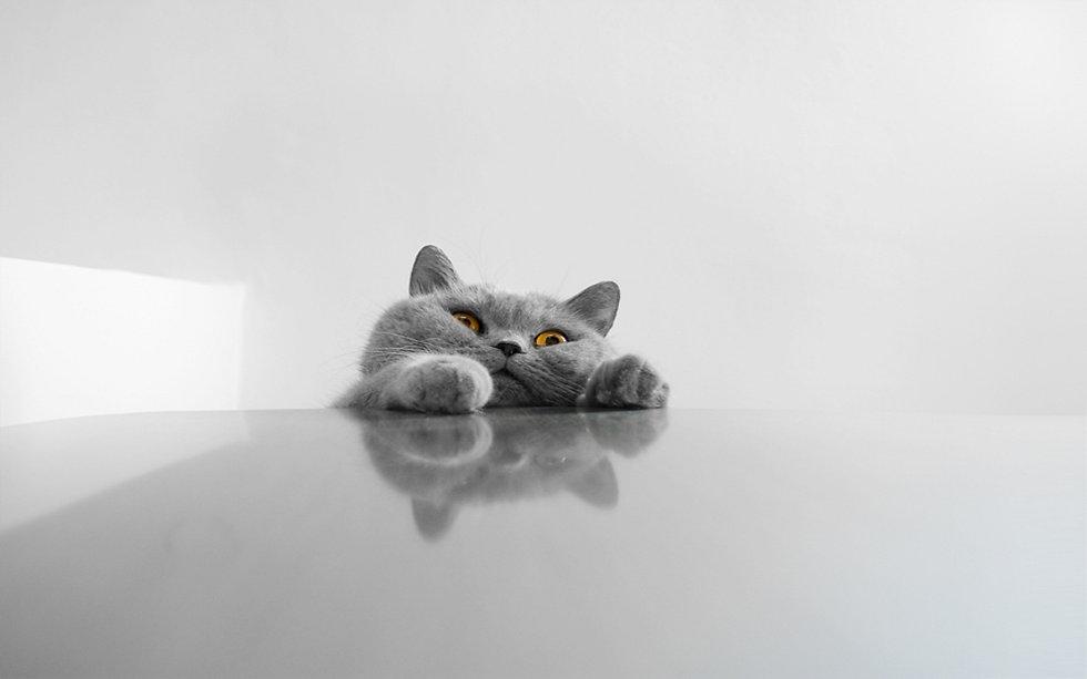 cat-desktop-wallpapers_093805342.jpg