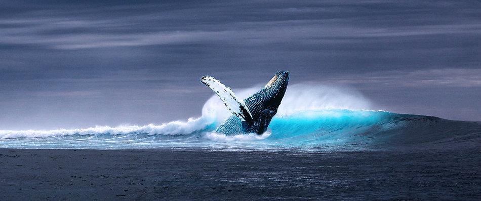 ocean-2051760.jpg