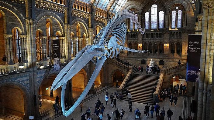 natural-history-museum-4587057_1920.jpg