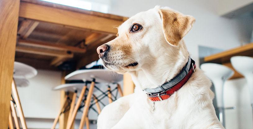 Buddy Dog Training & Care, Lake Tahoe, CA