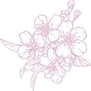 flores branca rosa.jpg