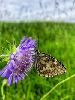zauberhafter Schmetterling auf Blume
