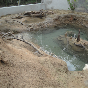 Otter Exhibit