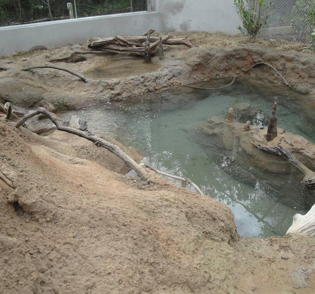 Otter Exhibit