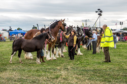 170624-Kelsall Steam Rally-1588
