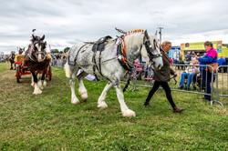 170624-Kelsall Steam Rally-1604