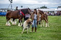 170624-Kelsall Steam Rally-1165