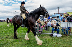170624-Kelsall Steam Rally-1216