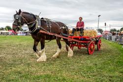 170624-Kelsall Steam Rally-1595