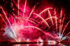 191105_Lions_Fireworks-0927.jpg