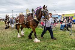 170624-Kelsall Steam Rally-1606