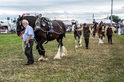 170624-Kelsall Steam Rally-1598