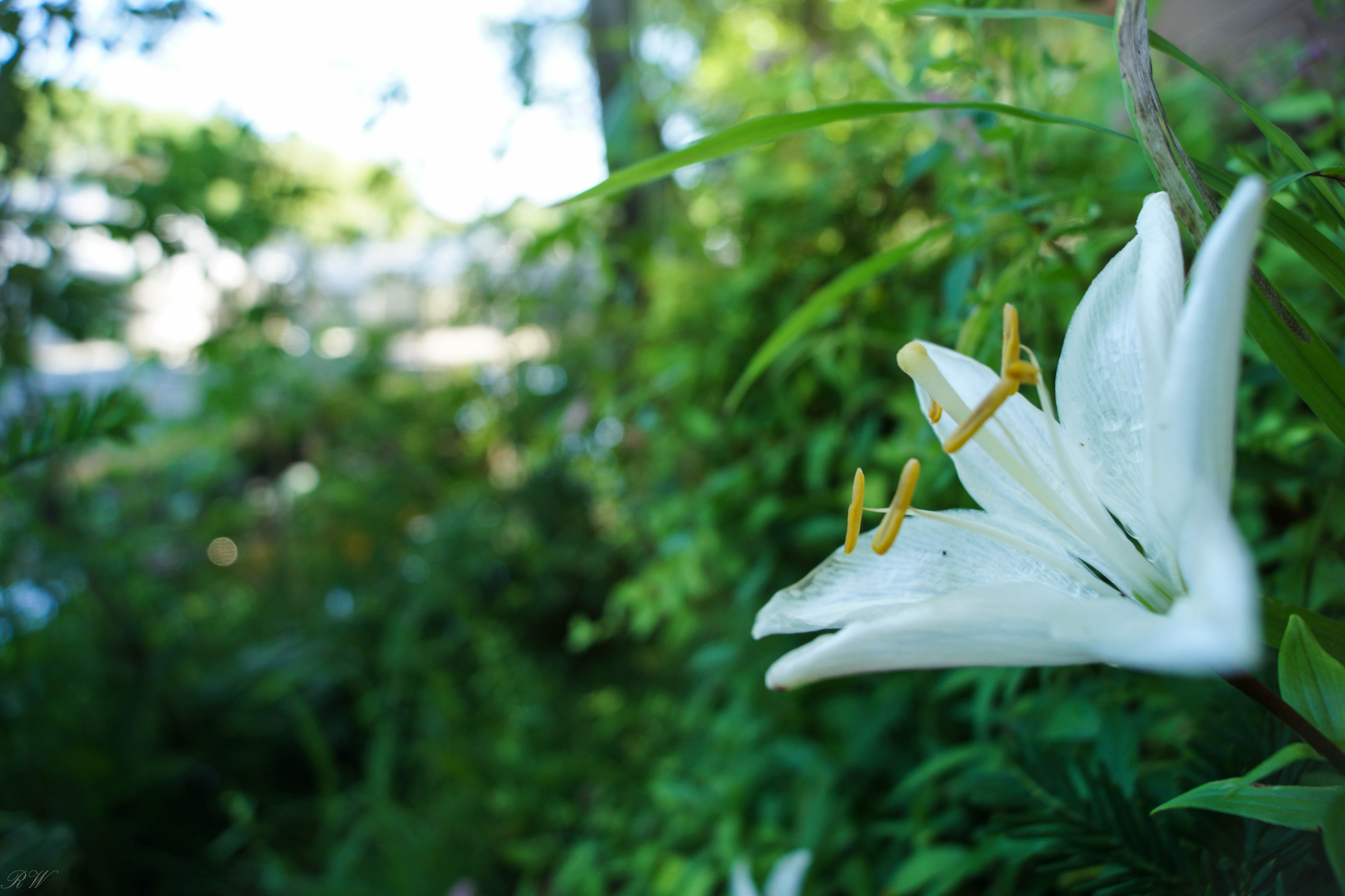 wildflowers galor