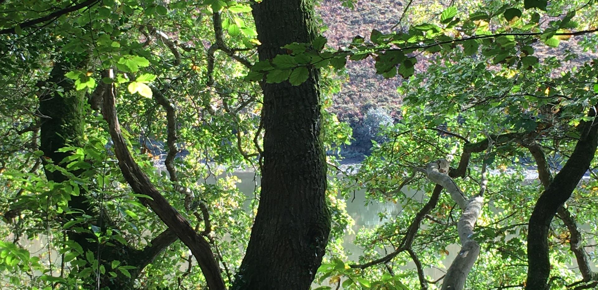 helford River Sept mood.JPG