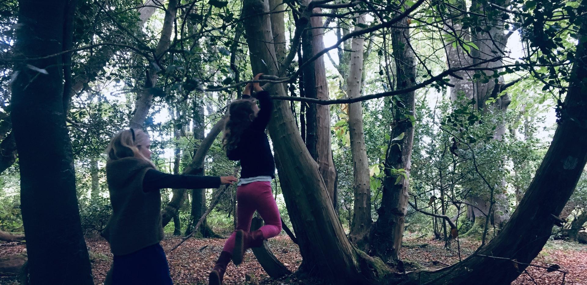 swinging trees.JPG
