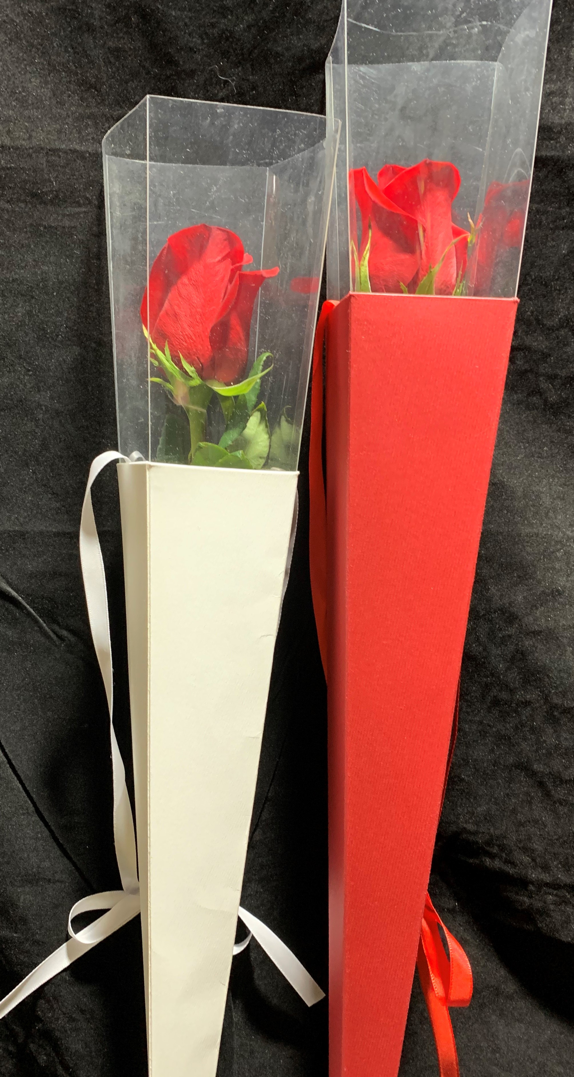 Single Rose Presentation Cone