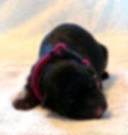 Female Newborn.JPG