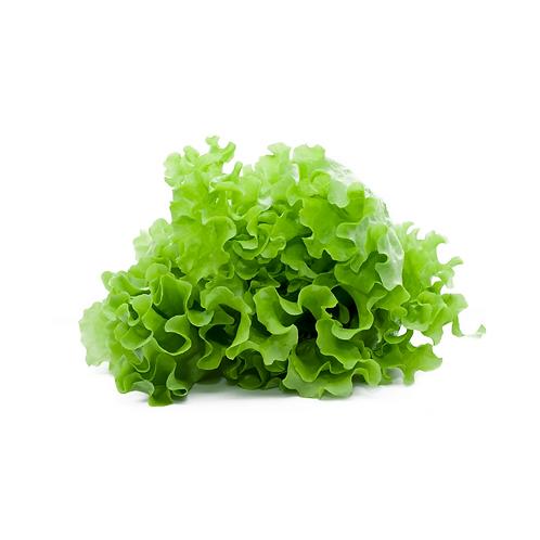 lettuce - Mesc1.5kg