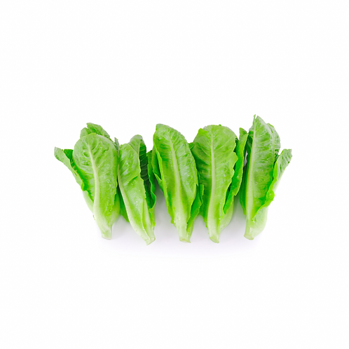Lettuce Baby Cos 20 pieces