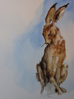 Watercolour Hare