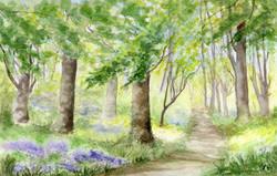 bluebell woods (1)