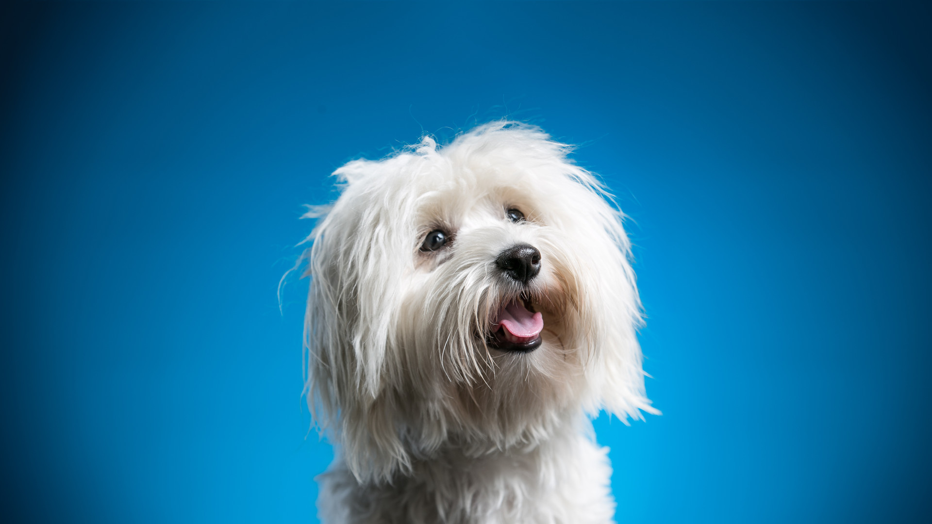 Monty the Havanese_Mar15-29-Edit-3.jpg