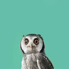 Owl_Blue.jpg