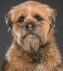 Baxterthe studio dog