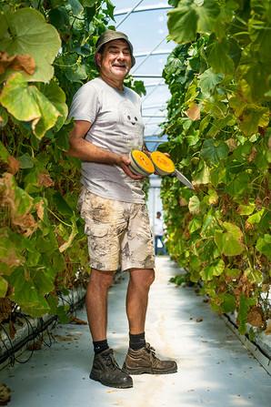 producteur de melons