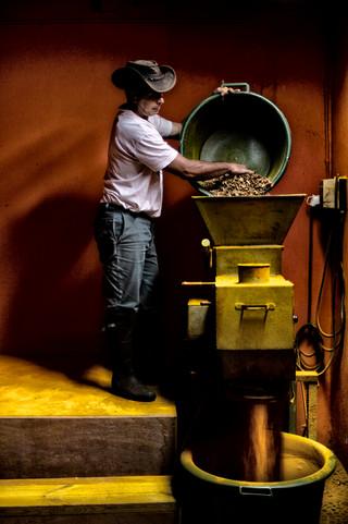 Guibert Hoareau, producteur de curcuma à la Plaine des Grègues.