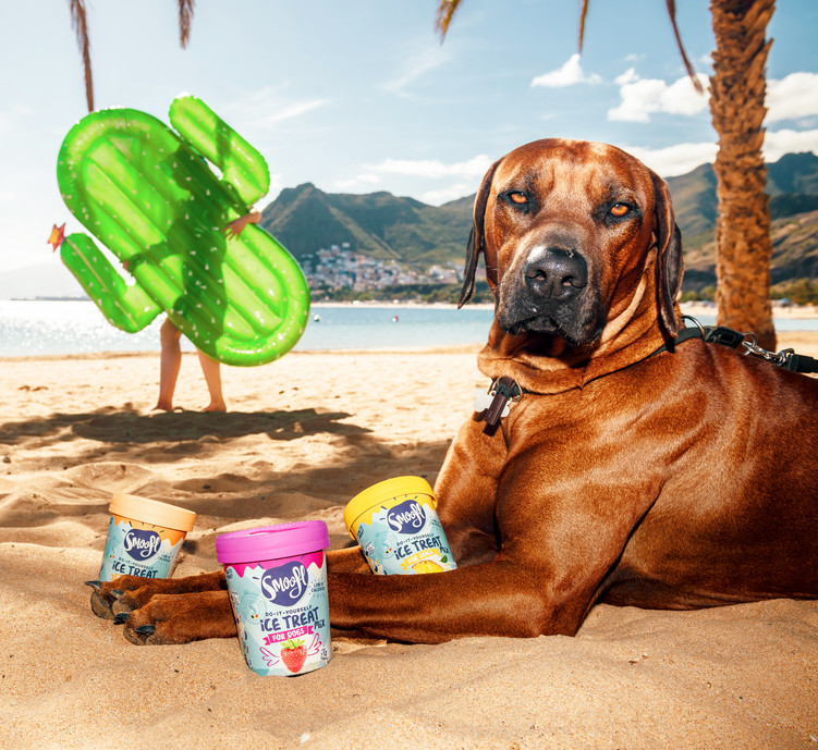 Smoofl---Beach-dog.jpg