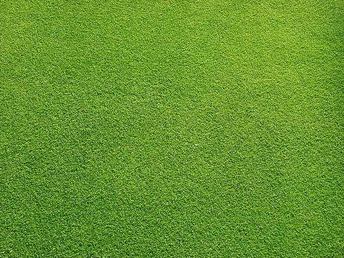 Травяные поле