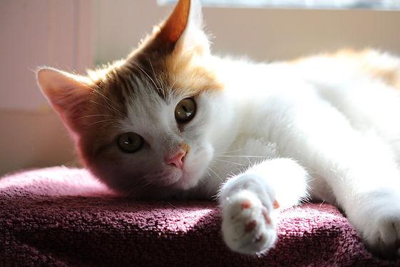 cat-5217494_1920.jpg