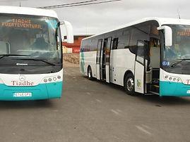 guaguas-fuerteventura-tiadhe.jpg