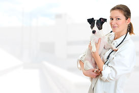Veterinary Debt Collection Services