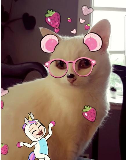 NowSheWrites, SnapCatFilters, Snapchat cat, Social Media bots