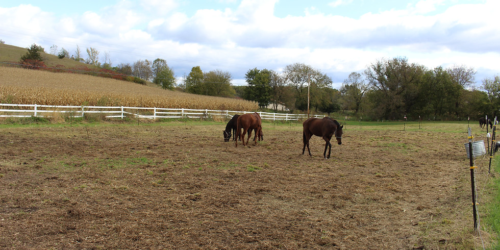 Introduction to Horses (All ages)