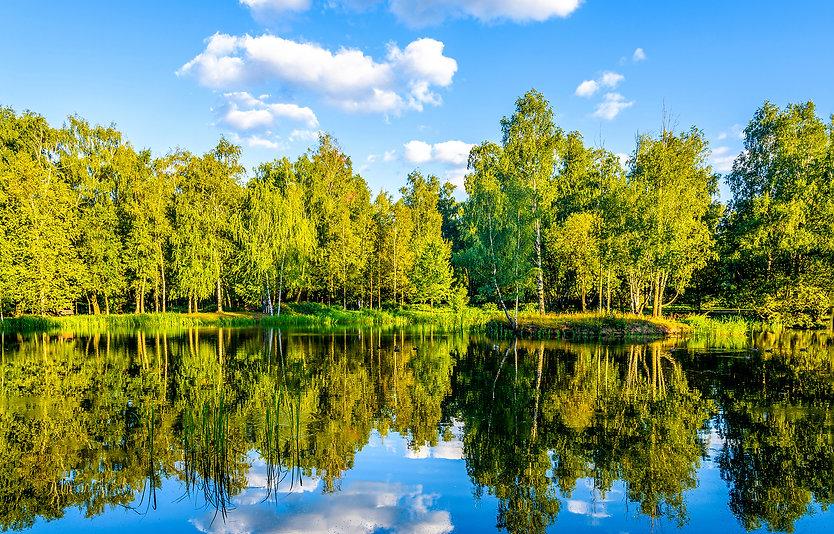 Summer forest river reflection landscape