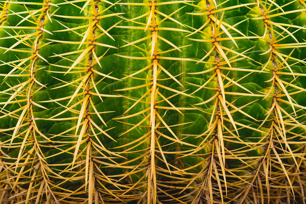 Close up of spiky cactus.