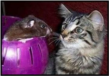 règles de datation de chat et de souris